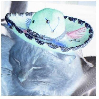 Cat Invert Colors