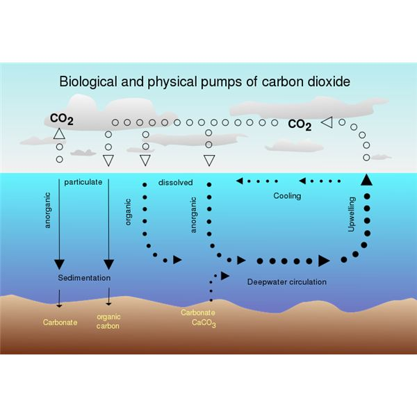 Explaining the carbon cycle with diagrams and a free student worksheet transfer of carbon between oceans and atmosphere from wiki commons by mcsush 3 ccuart Image collections