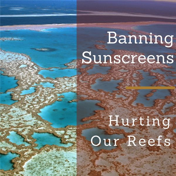 Why Sunscreens Are Harmful to Humans and Reefs