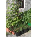 Grow a variety of plants in different containers