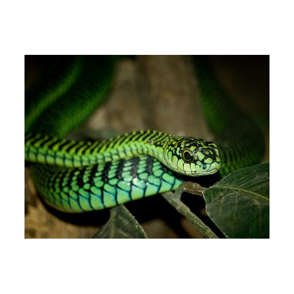 Photographing Snakes: Learn Tips & Techniques on How to Master Snake Photography