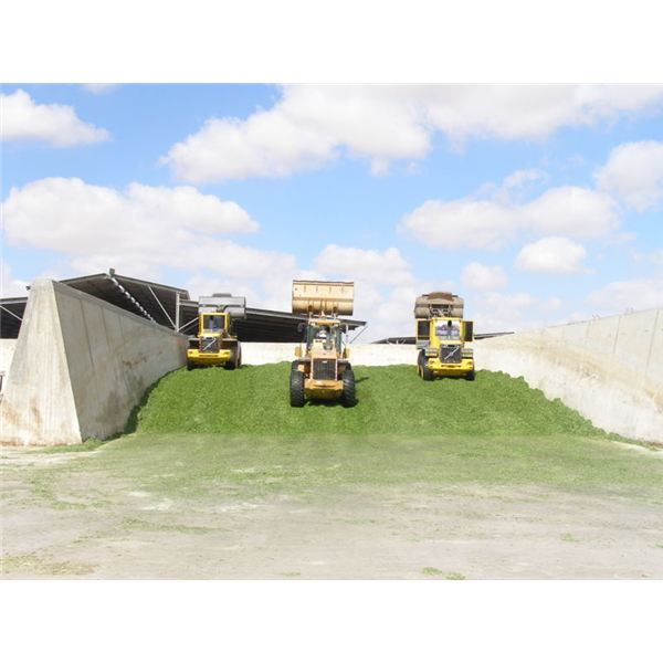 800px-Silage tractors Loaders compressing wheat silage