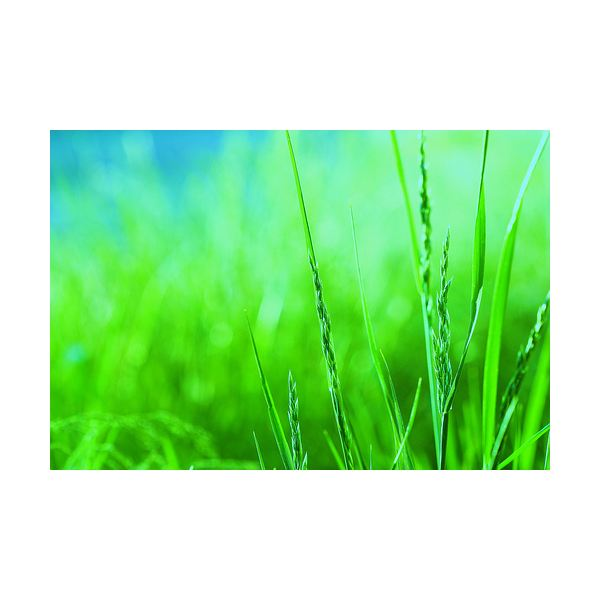 The Best Rated Organic Lawn Fertilizers