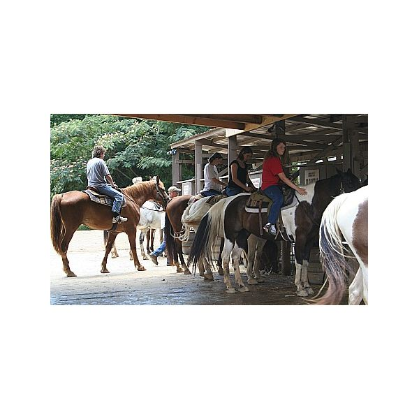 Benefits of Horseback Riding for Homeschooled Students: Educational Aspects & Where to Find Local Lessons