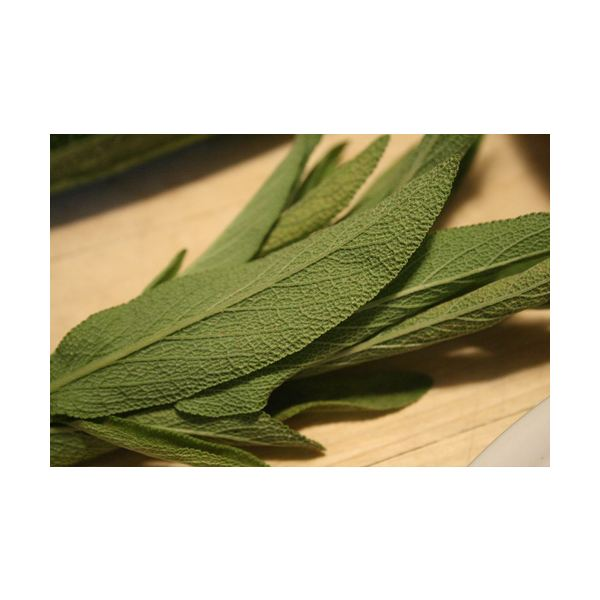 Sage Skin Care Benefits and Recipes