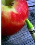 Teacher Apple Morgue File