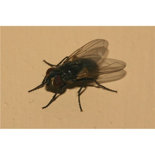 Two Books All About Flies With Activities for Preschool