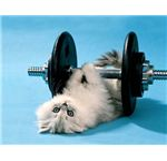 kitten-weights-7
