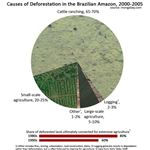 Deforestation in the Amazon from Wiki Commons by mongabay