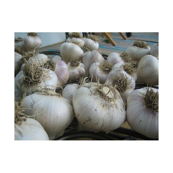 Garlic - Image Credit to https://www.flickr.com/photos/roeshad/