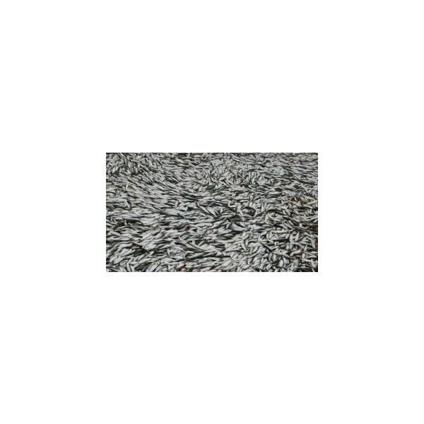 negatives_of_fish_farming