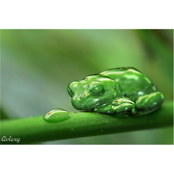 aviary dew frog,free graphic design tools