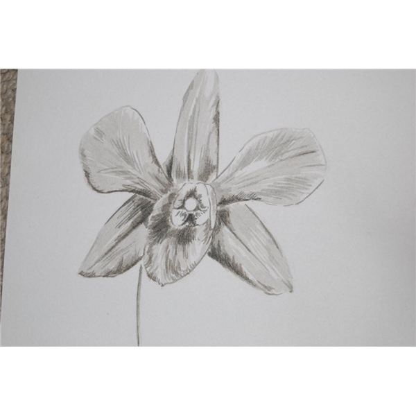 artist pens brown / grey of orchid, R Clarke