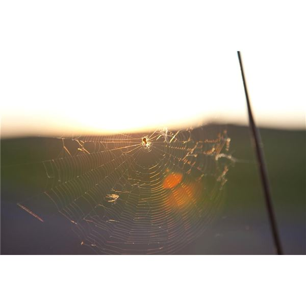 A backlit spider and web.
