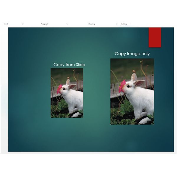 Copying Images in PowerPoint 2013: Tips for Maintaining the Right Size and Dimensions