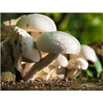 Fungus Among Us: All about Mushrooms and Spores