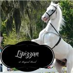 The History and Origins of the Lipizzan Horse