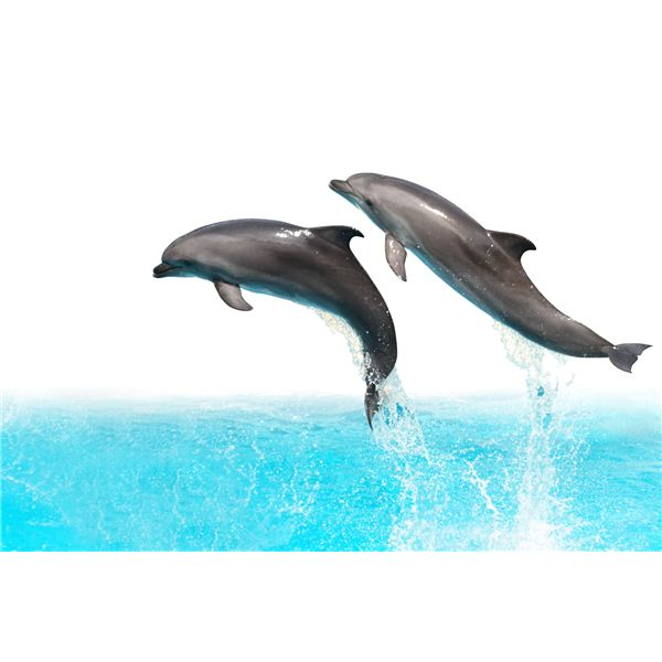Fun Dolphin Activities, Book Suggestions & Craft for Preschoolers: Echolocation & Other Facts on Dophins