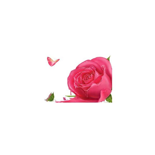 rose-backgrounds-butterfly-and-rose