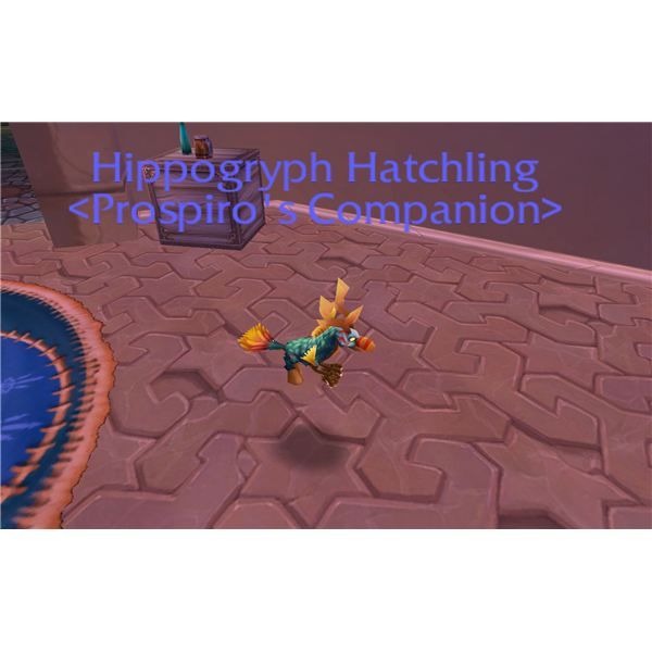 WoW Hippogryph Hatchling Pet