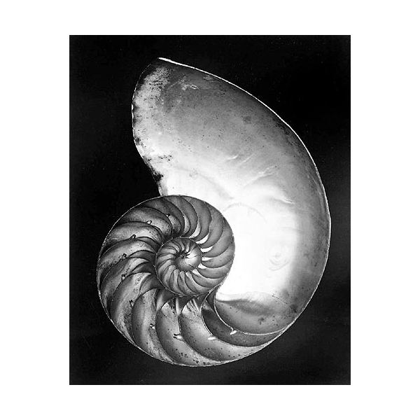by Edward Weston