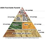 Kids Food Pyramid USDA
