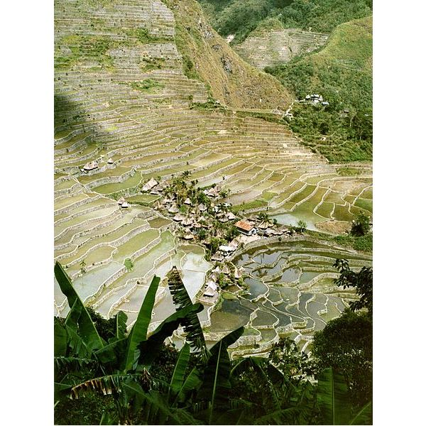 449px-Batad rice terraces