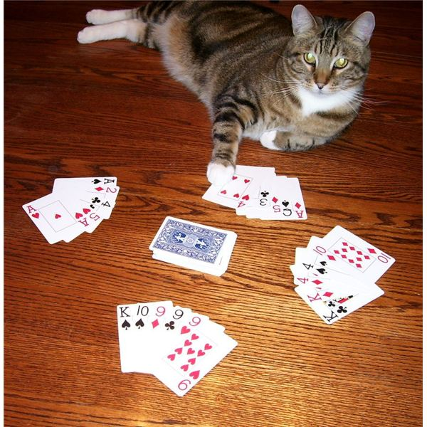 Do you have any fours go fish card game rules for Fish cat game