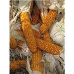 Dried Corn used in Heating Stoves