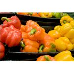 Bell Peppers Are Rich in Silica