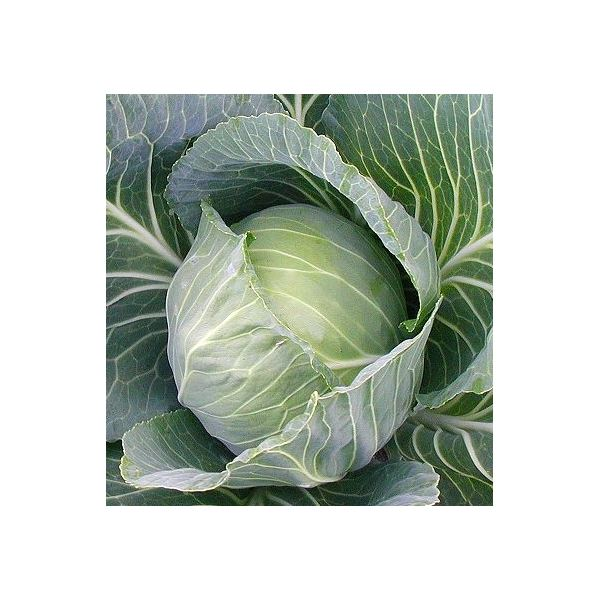 Learn about Raw Cabbage Juice and Stomach Ulcers
