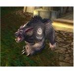 Alli Druid Bear Form