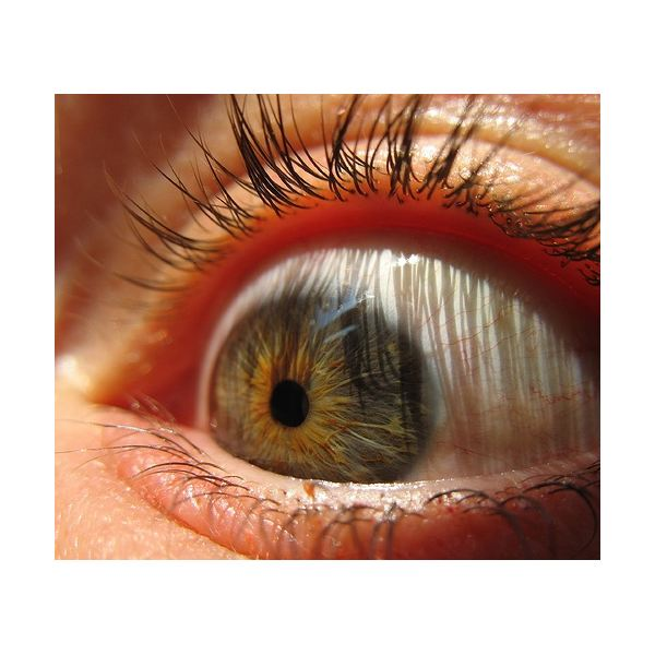 Natural Ways to Improve Vision: Is this Possible? Learn what Research has to Say