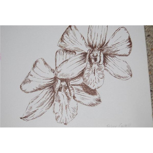 small artist pen sepia of orchid, R Clarke