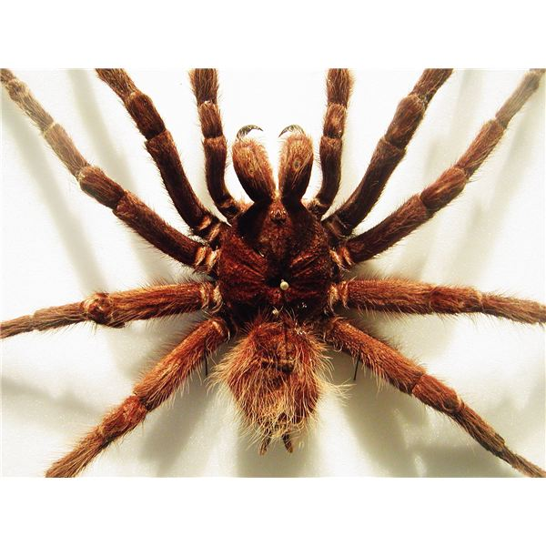 How to Get Rid of Spiders in the House Naturally