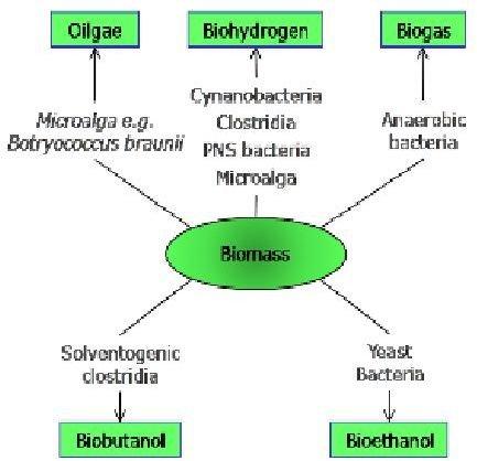 Algae Processes(www.napier.ac.uk)