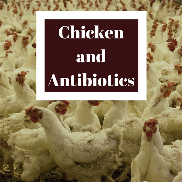 Chicken and Antibiotics