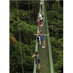 Skywalk in Costa Rica by Eco Family Adventures