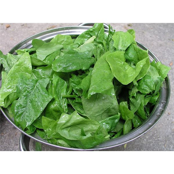 Nutrition Guide for Spinach Juice: Calorie Content and Nutrient Listing