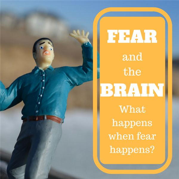 Cause and Effect of Fear in Your Brain