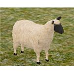 A male sheep from ATITD