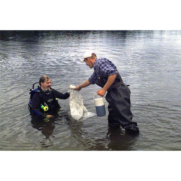 Researchers collecting invasive Eurasian Watermilfoil · DA-SD-03-00978