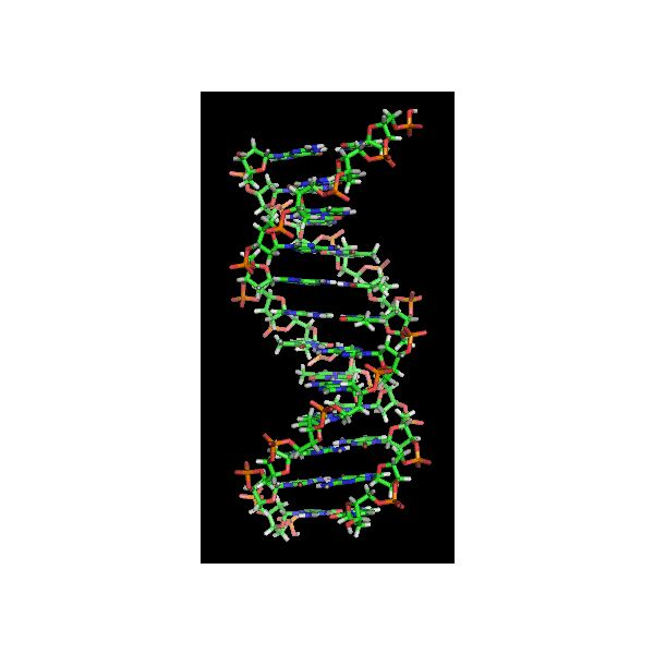 DNA structure graphic - released under GNU Free Documentation License