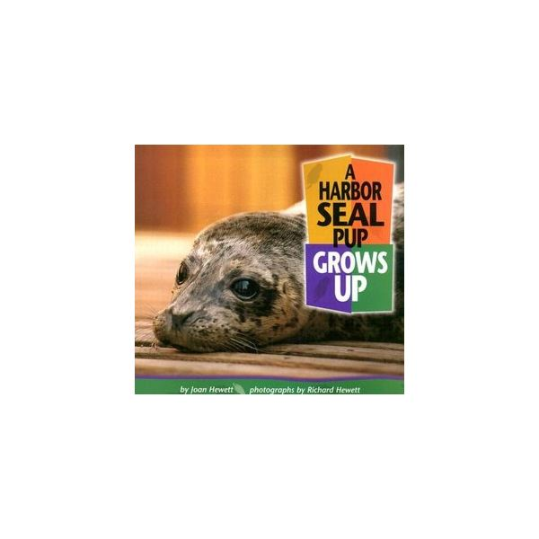 A Harbor Seal Grows Up