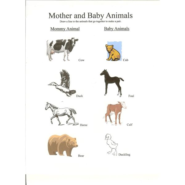 Preschool Lesson Mother And Baby Animals With Free Worksheet