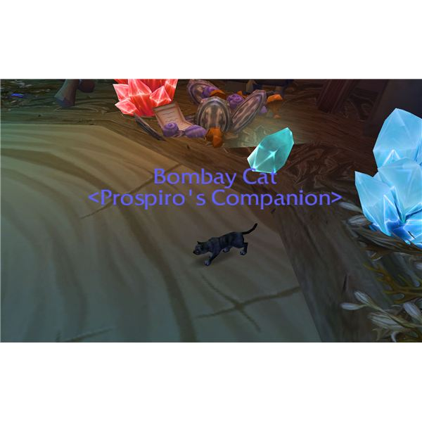 Beginner's Guide to World of Warcraft Vanity Pets, Purchase Easy to Find WoW Mini Companion Pets