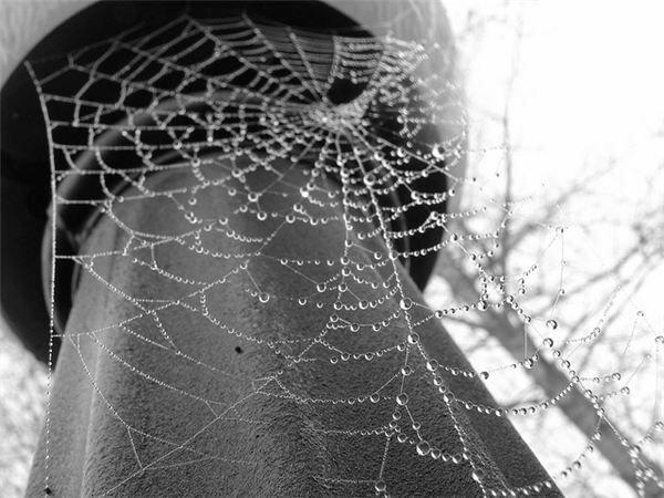 Lightpole Web