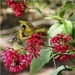 butterfly (using a fast shutter speed)