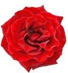 640px-- Flower 02 -