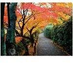 fall-walkway-8